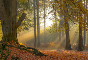 Walks Northamptonshire